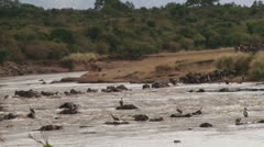 Wildebeests crossing the river on a rocky and dangeorous spot 3 Stock Footage