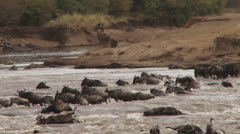 Wildebeests crossing the river on a rocky and dangeorous spot 1 Stock Footage