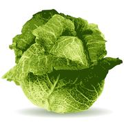 Cabbage illustration Stock Illustration