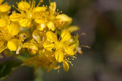 Stock Photo of beautiful yellow flowers in nature