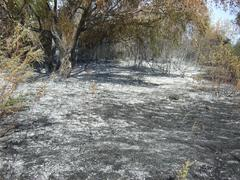 burnt forest - stock photo