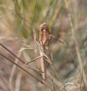 Stock Photo of yellow mantis on the nature. macro