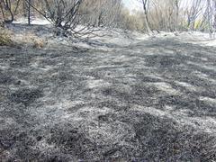 Burnt forest Stock Photos