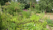 Stock Video Footage of pond and plants in house back garden, back yard