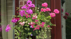 Hanging basket and flowers at house front door Stock Footage