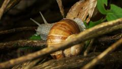 Snail 002 Stock Footage