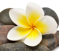 Flower and stones Stock Photos