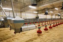 Poultry farm Stock Photos