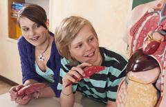 Germany, Emmering, Girl and boy (12-13) watching at human organs model, smiling Stock Photos