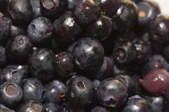 Background of blueberries. macro Stock Photos