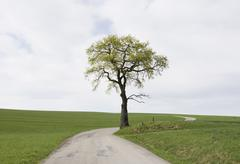 Austria, Land Salzburg, Tree on country road through a meadow - stock photo