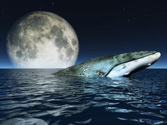 Whale on oceans surface with full moon Stock Illustration