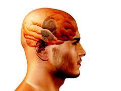 Finger print on brain Stock Illustration