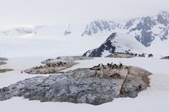 South Atlantic Ocean, Antarctica, Antarctic Peninsula, Lemaire Channel, Adelie - stock photo