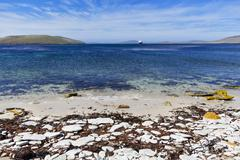 South Atlantic, West Falkland, Falkland Islands, Falklands, New Island, View of - stock photo