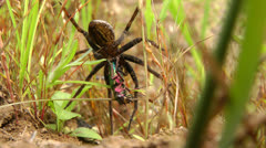 Spider on the hunt Stock Footage
