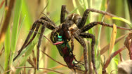 Stock Video Footage of spider on the hunt