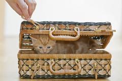 Germany, Human hand holding hook with Kitten in box, close up Stock Photos