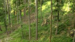 Flying sidewards through forest Stock Footage