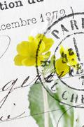 Close up of vintage postmark on primose Stock Photos