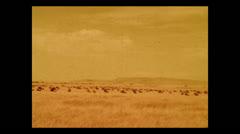 Wildebeest herd on the Serengeti, Tanzania 1937 Stock Footage