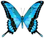 Stock Illustration of Beautiful isolated blue butterfly
