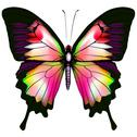 Stock Illustration of Isolated Butterfly