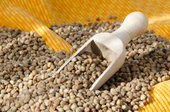 buckwheat groats - stock photo