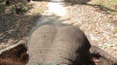 Elephant riding head Stock Footage