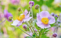 Lila flowers, macro Stock Photos
