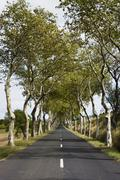 France, Aude, Lagrasse, View of street passing through trees Stock Photos