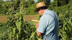 Sampling sweet corn Stock Footage