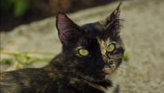 Head of a Cat Stock Footage