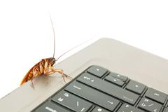 Cockroach climbing on keyboard - stock photo