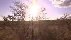Stock footage Africa -panorama african bush Stock Footage