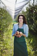 Croatia, Baranja, Young woman holding apples, smiling, portrait - stock photo