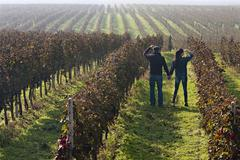 Croatia, Aljmas, Young man and woman standing in vineyard - stock photo