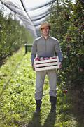 Stock Photo of Croatia, Baranja, Young man with apple crate in apple orchard