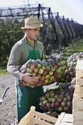 Croatia, Baranja, Young man holding apples in net bag - stock photo