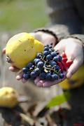 Croatia, Baranja, Young  woman holding apple and grapes Stock Photos