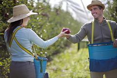 Croatia, Baranja, Young couple holding apple, smiling - stock photo