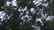 Stock Video Footage of Strong Wind Blows Trees