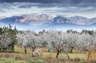 Stock Photo of Spain, Balearic Islands, Majorca, View of almond trees with mountains in