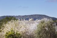 Stock Photo of Spain, Balearic Islands, Majorca, Blossoming almond trees, church in alqueria