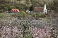 Stock Photo of Austria, Lower Austria, Wachau, St. Johann im Mauerthale, View of blossoming