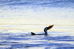 Villieläimet ja luonto - merimetso lintu Kuvituskuvat