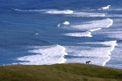 beach in new zealand - stock photo