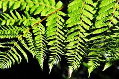 New zealand fern Stock Photos