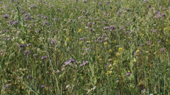 Field edge with wild flowers hold + pan left Stock Footage