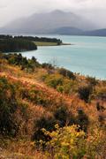new zealand south island west coast forest - stock photo
